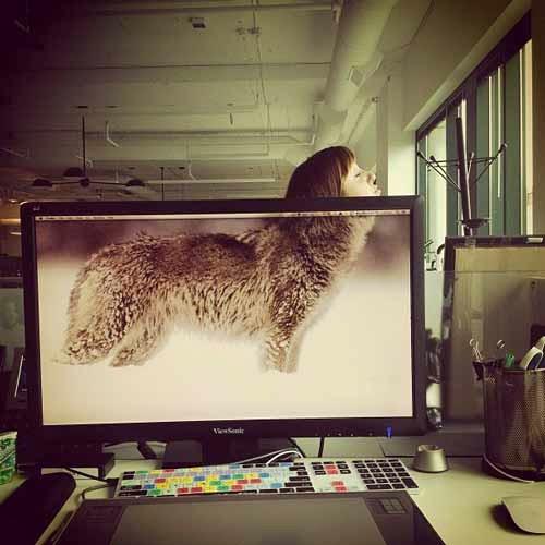 Na foto, um monitor de computador mostra um lobo por completo, faltando apenas o focinho do animal. Atrás do monitor, uma garota se posicionou de forma que completa o focinho do animal.