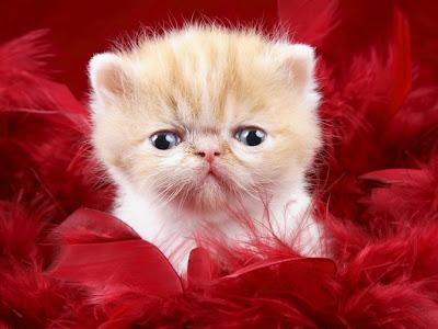 Mèo con đáng yêu, mèo con dễ thương, mèo con cute