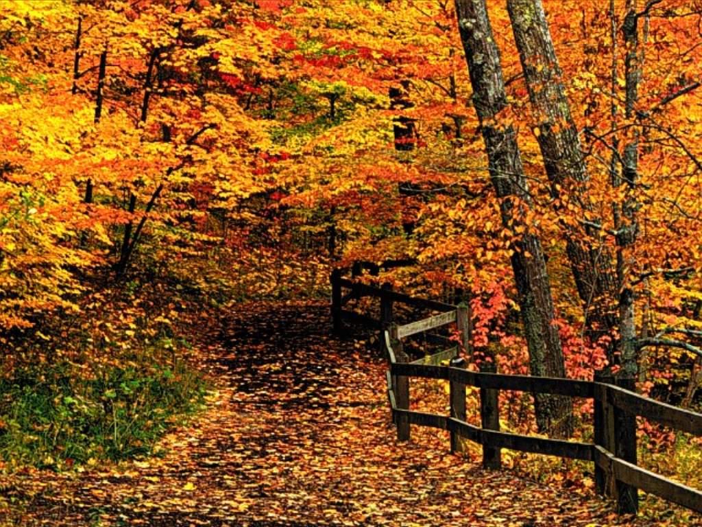 La luna nel lago autunno la raccolta del qi for Autunno sfondi desktop