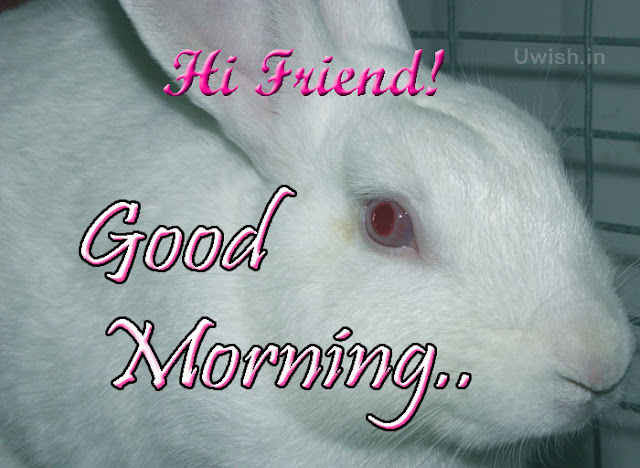 Hi Friend. Good Morning with a rabbit eyes.  Good Morning e greeting cards and wishes to your friends.