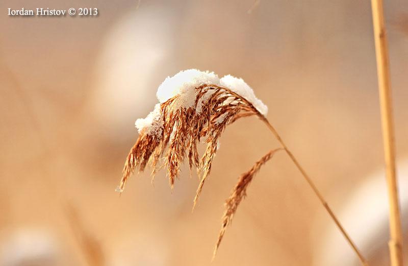 wildlife photography by Iordan Hristov