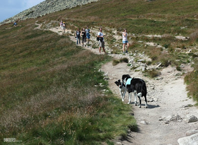 dogs on a mountain track