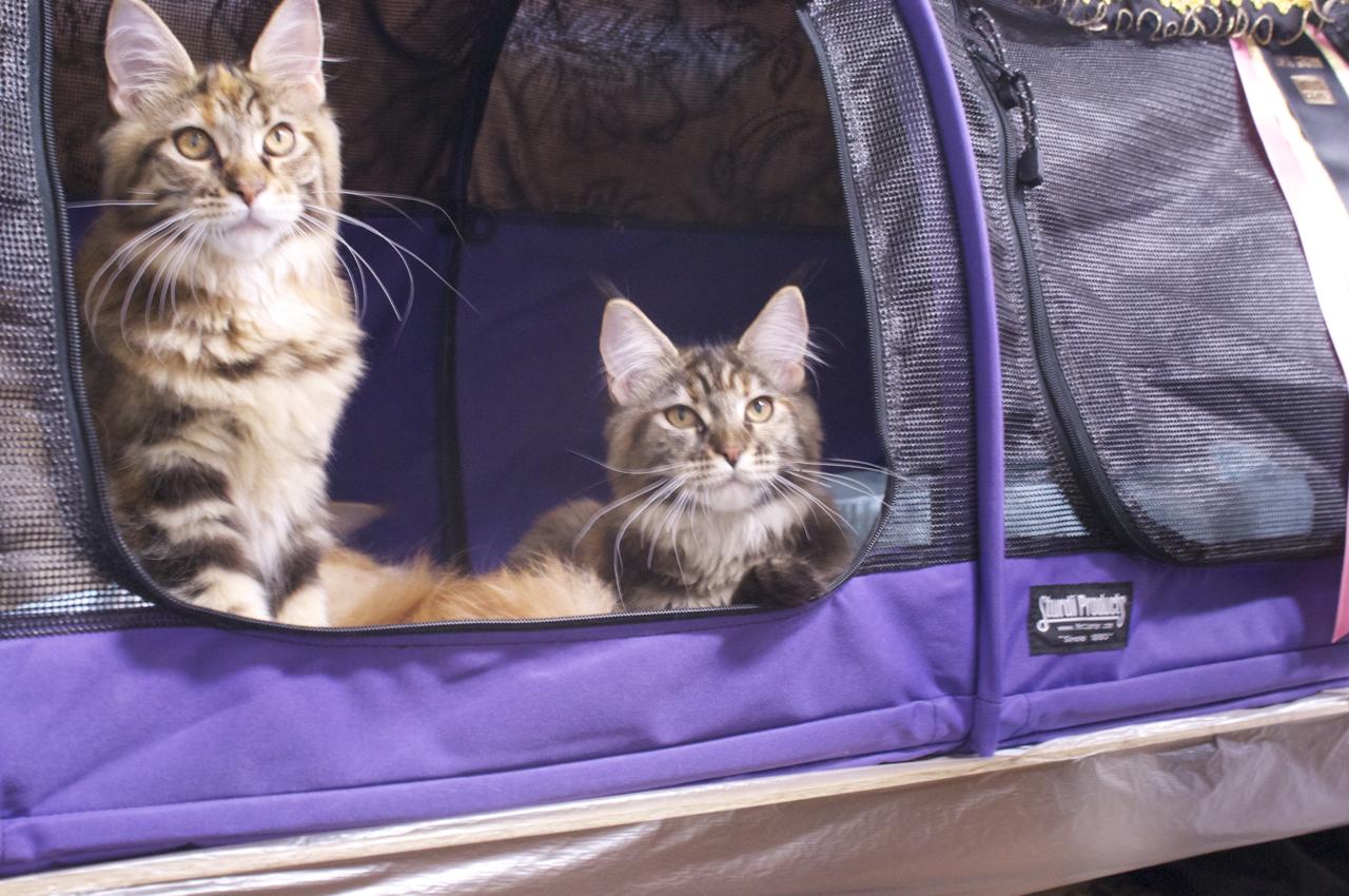 emergency kittens twitter