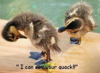 funny_duck_picture