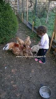 poules enfant bambin animaux