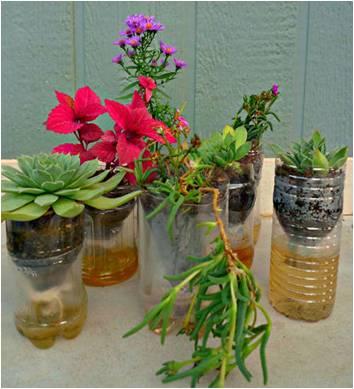 El nuevo sentido sembrando y cosechando for Matas ornamentales