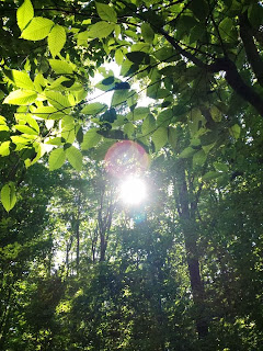 nature, sunlight, sun, leaves, trees