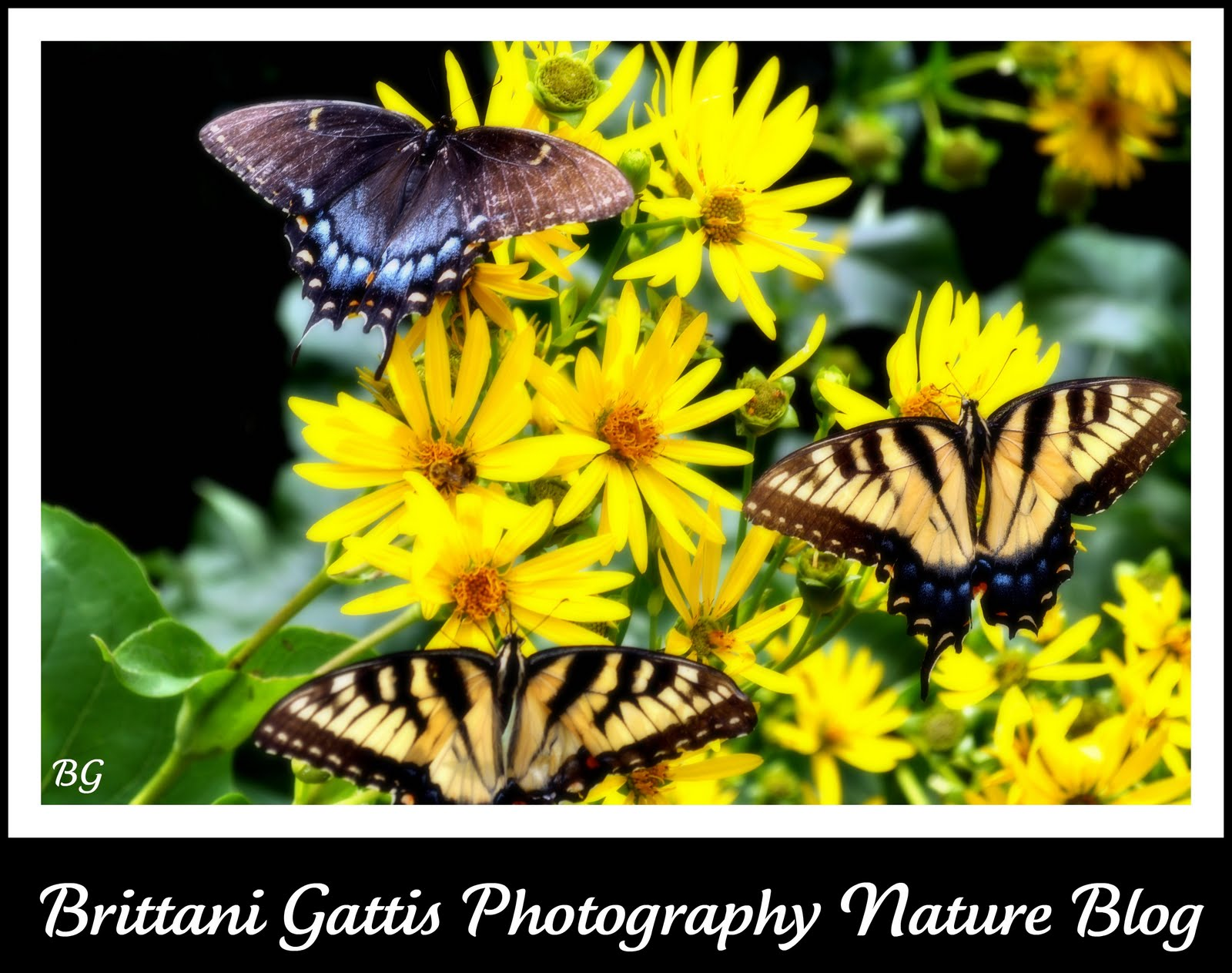 Brittani Gattis Photography Nature Blog