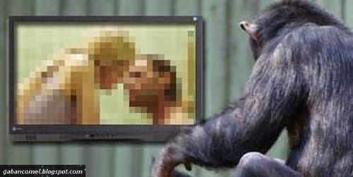 Aneh Cimpanzi Bernama Gina Mempunyai Hobi Menonton Filem P0rn0