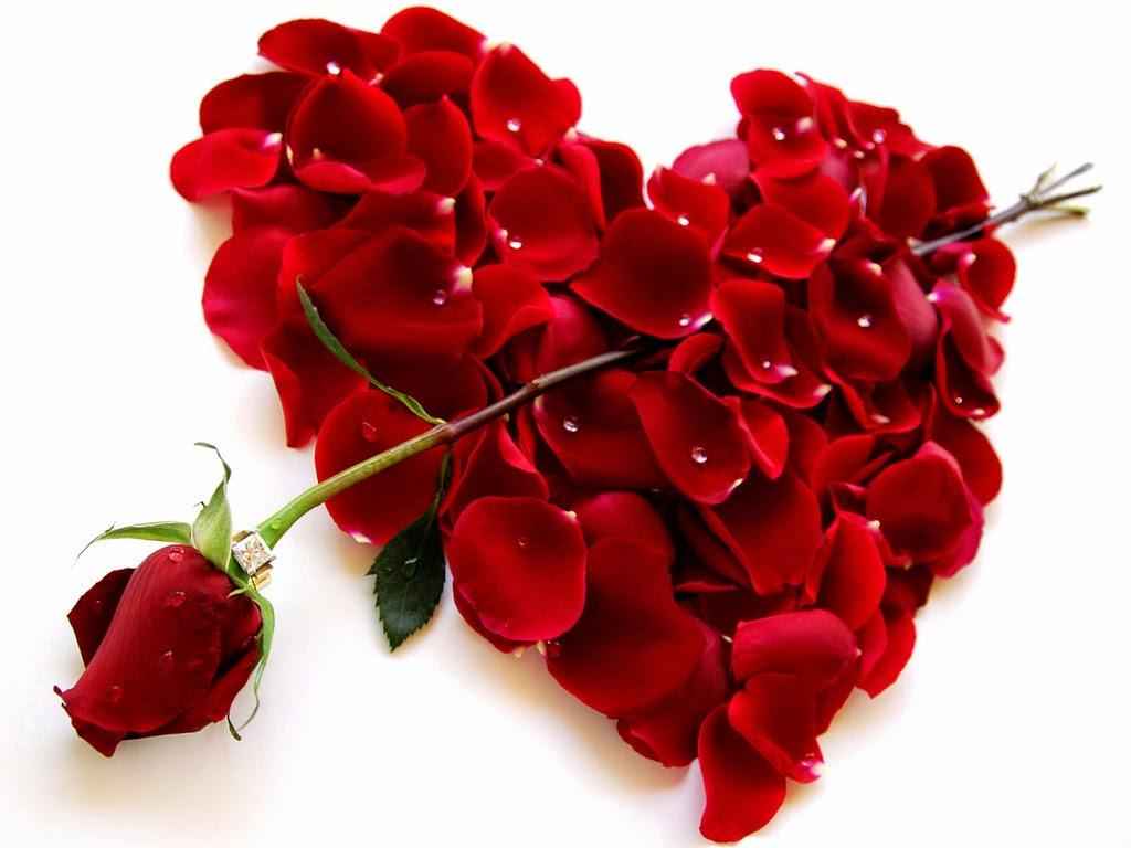 Dia dos Namorados - Um Asno