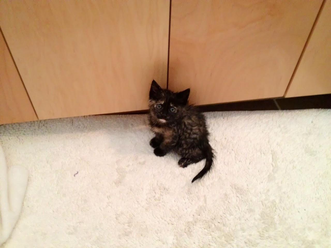 Kitty falls in bathtub