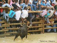 Fotos Barrancos 2013