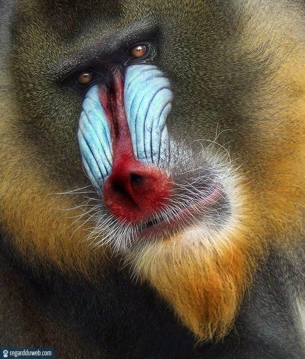 Images rigolotes et insolites Animal - Singe v90 - Des milliers de photos drôles et insolites
