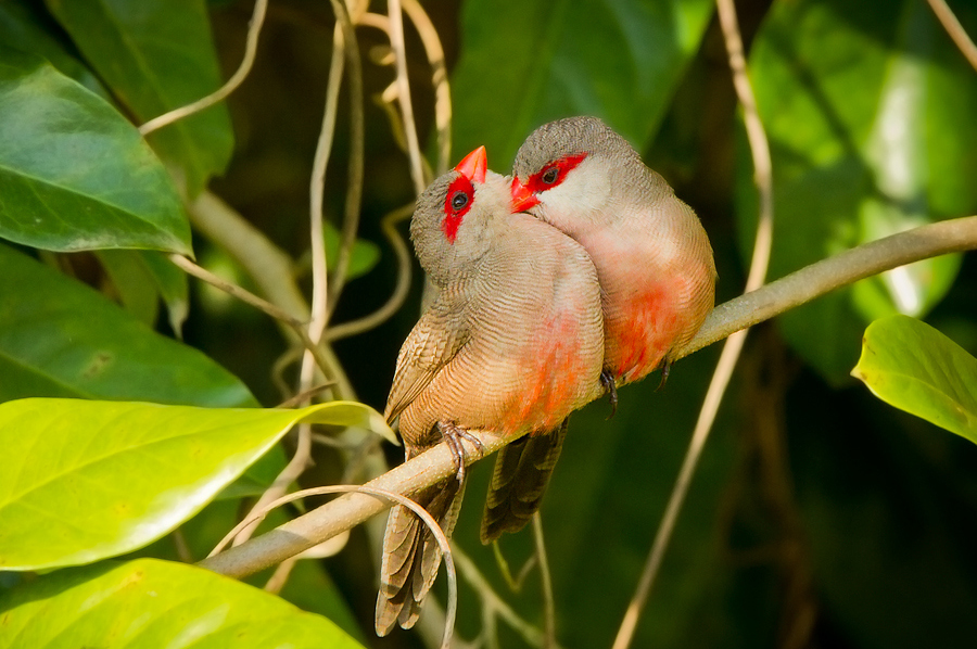 Beautiful love birds images - photo#15