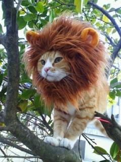 Gato com fato de leão