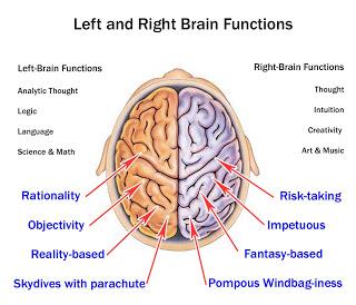 Brain Hemispheres4