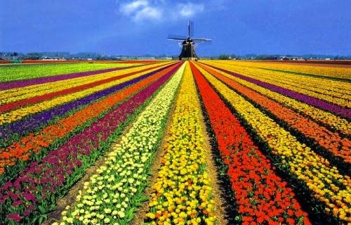 El hombre que cambio su casa por un tulipan - El hombre que cambio su casa por un tulipan ...
