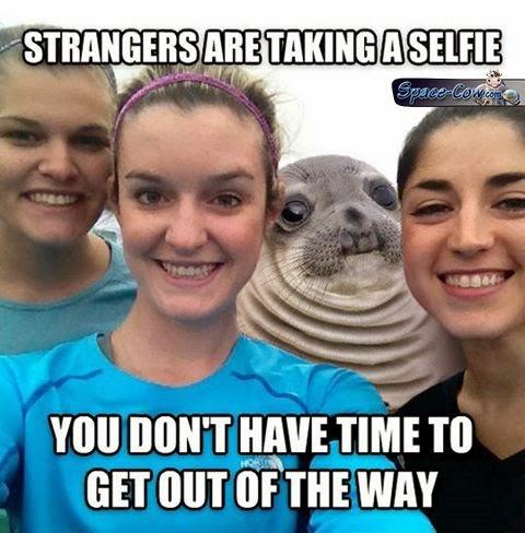 funny uncomfortable seal pics