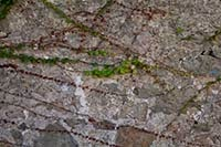 Ivy on stone wall texture