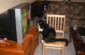 Confesiones de una Gata Seriéfila