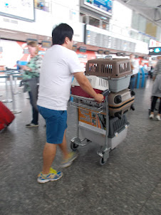 Tuesday(15-9-2015) :- At Budapest Airport. A traveller carting pet dogs in carriers.