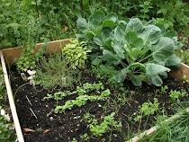 Our Garden Blog