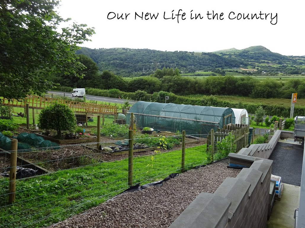 Our New Life in the Country