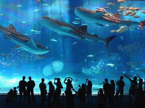 بالصور: أكبر حوض أسماك في العالم