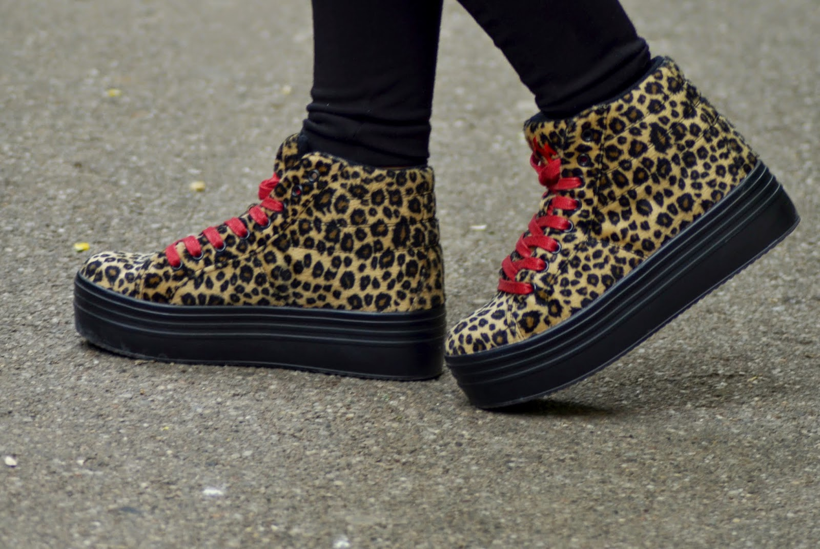 creepersi leopard