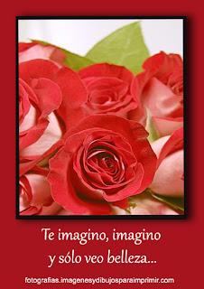 La belleza de las rosas rojas Fotos de rosas rojas para facebook