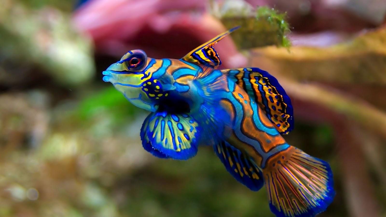 http://4.bp.blogspot.com/-jMXPsDq2RHg/UHLdHK-Jb8I/AAAAAAAAFQ4/76NY9WFJ0AU/s1600/exotic-fish-1080.jpg