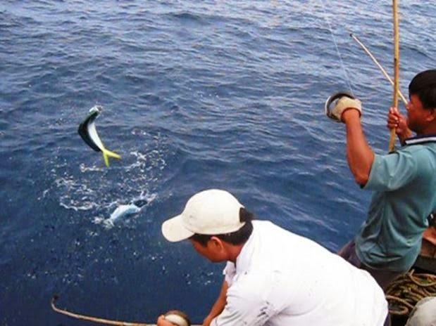 May cau cá Shimano Baitrunner 8000 hang xin dang co khuyen mai lon