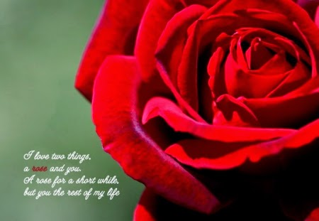 Flower Quotes image
