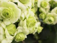 Barocka blomster
