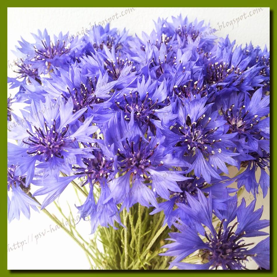 Полевые цветы - васильки