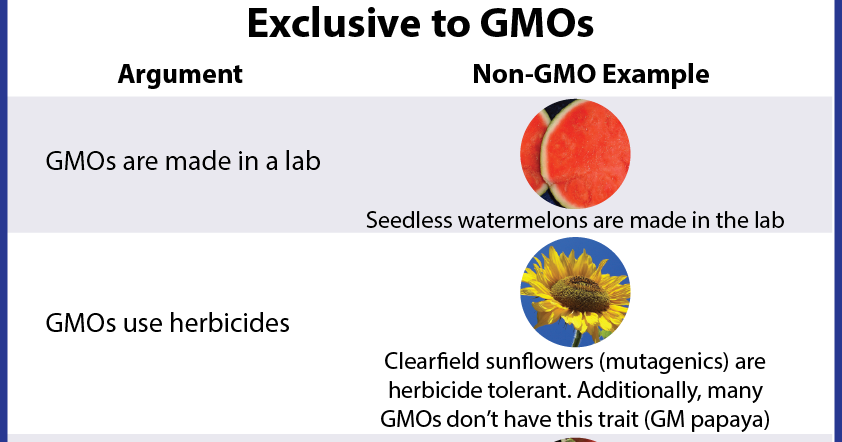 an argument against the use of genetically modified food The arguments for and against genetically modified foods genes are found in every living organism and are said to be the blueprints of the organism genetic engineering involves modifying the dna sequence involving the insertion of new genes.