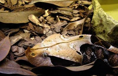 5 animais que usam camuflagem na Natureza