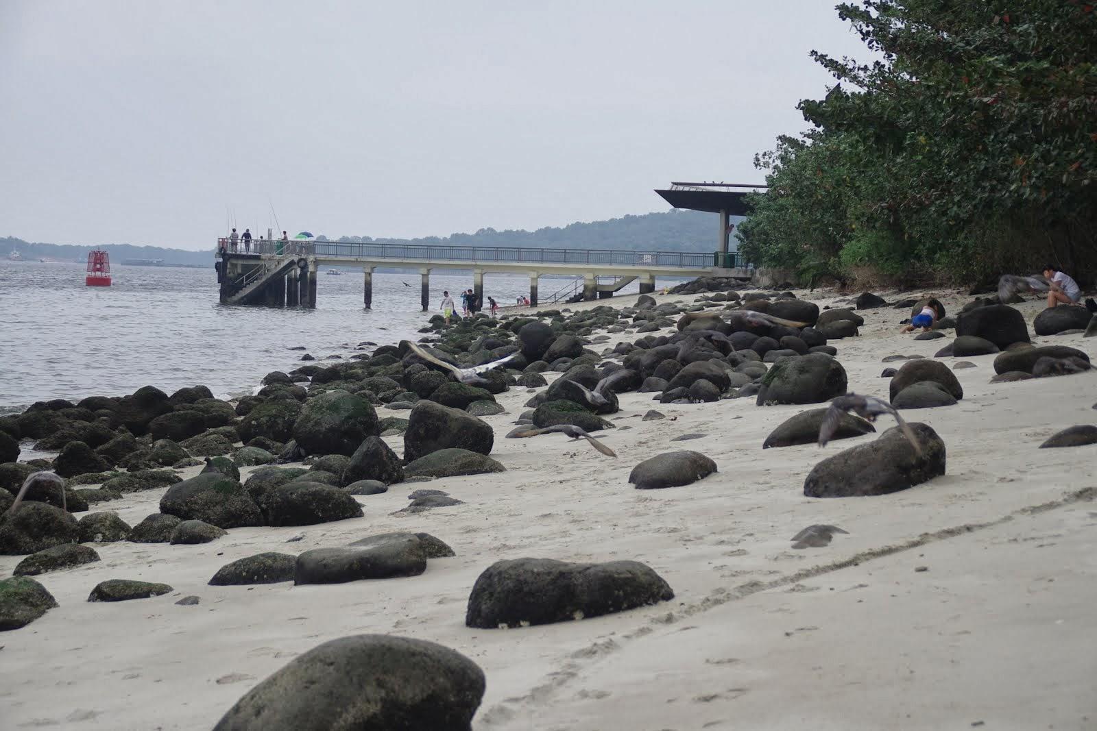 punggol rocky beach