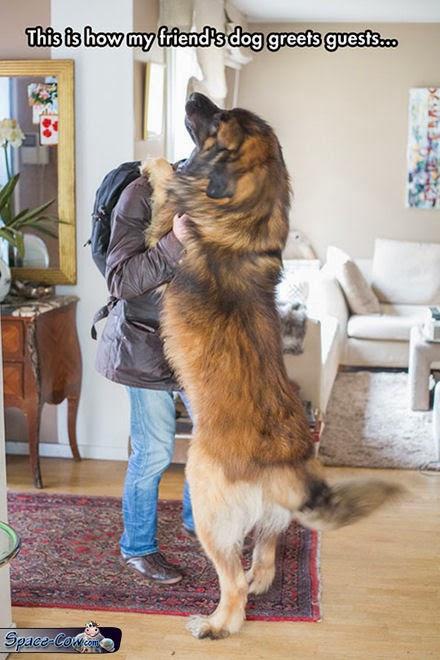 funny pets big dog