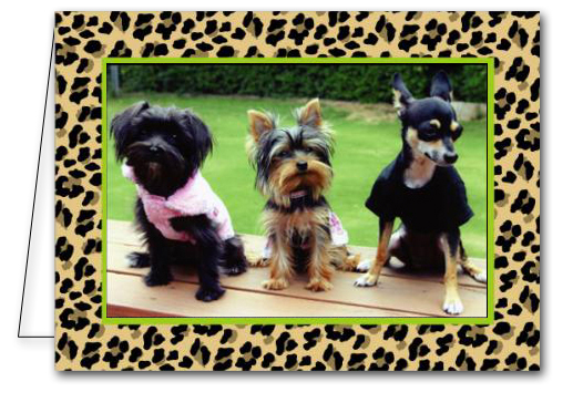  Leopard Print Holiday Photo Cards