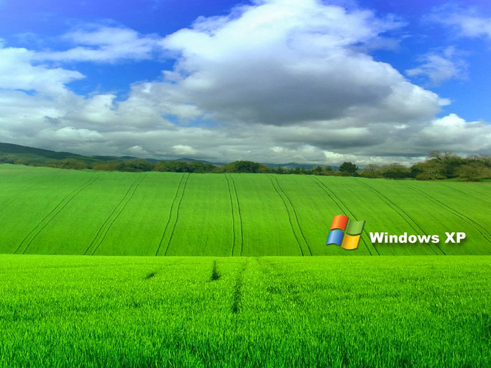 clovisso wallpaper gallery: grass windows xp wallpapers