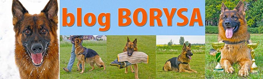 Borys, pies który mówi własnym głosem