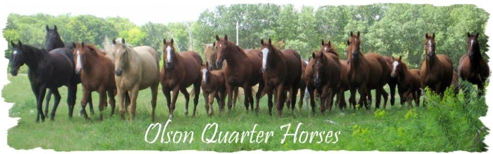 Olson Quarter Horses