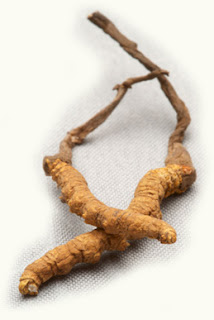 The cordyceps sinensis have been used in physical medicine to treat asthma and allergy
