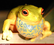 Here are some Easter animal pics for you to enjoy! easter frog