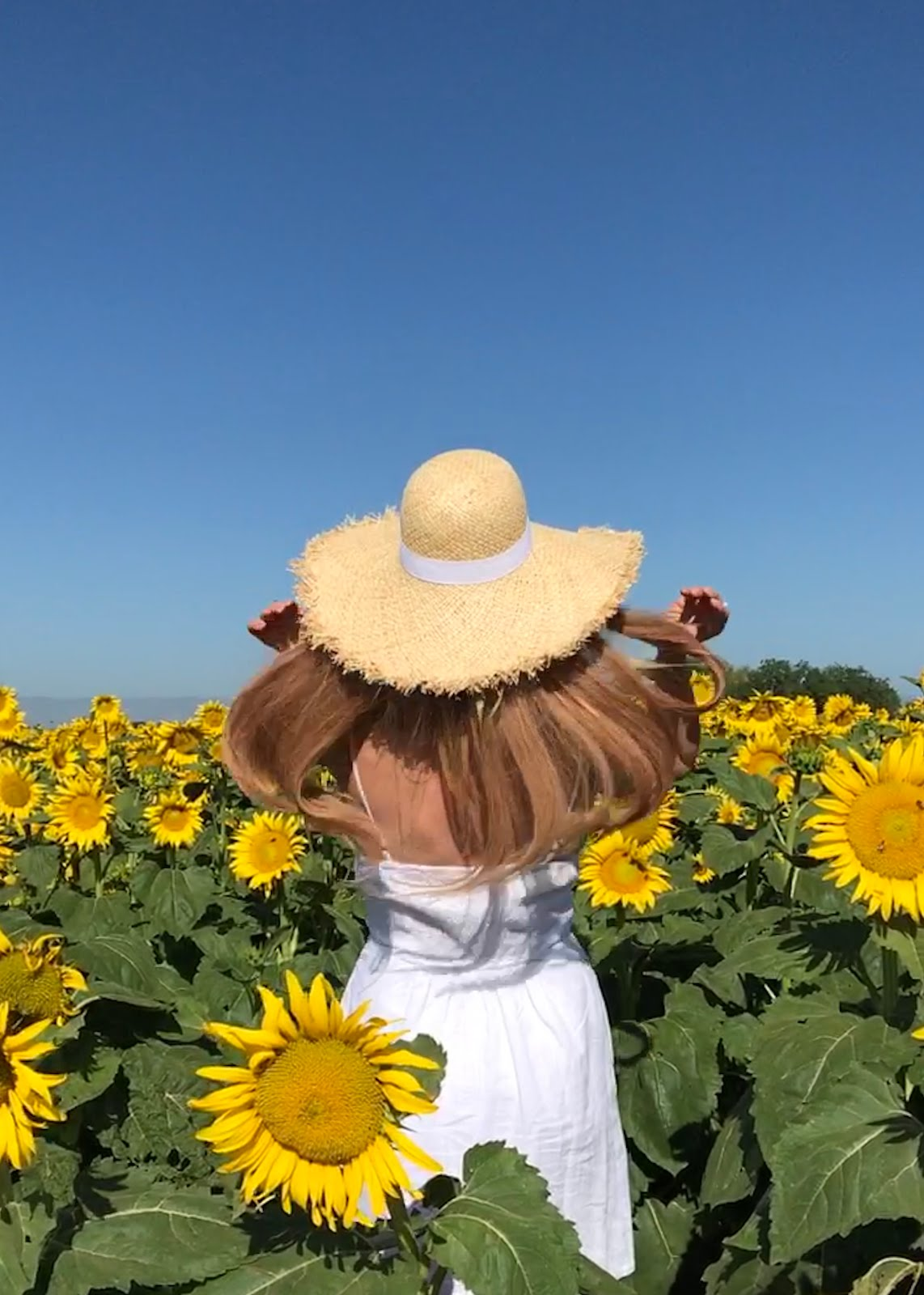 Visiting Sunflower Fields In Northern California