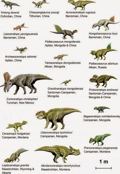 %E5%9C%9615.5+%E8%A7%92%E9%BE%8D(ceratopsians).jpg