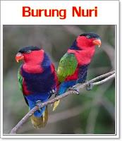 5 jenis burung yang paling hebat meniru suara manusia