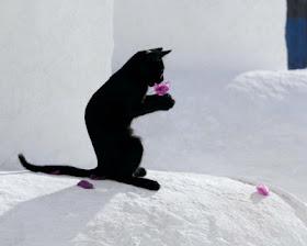 Kucing Hitam - www.jurukunci.net