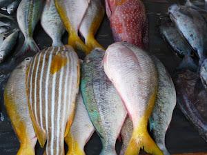 Indo Fish